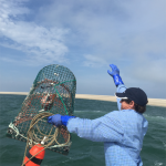 Fisherman throwing lobster pot overboard back into ocean after emptying of lobsters