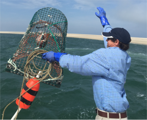 Lobsterman throwing newly-baited lobster trip with rope and buoy attached off the side of a boat